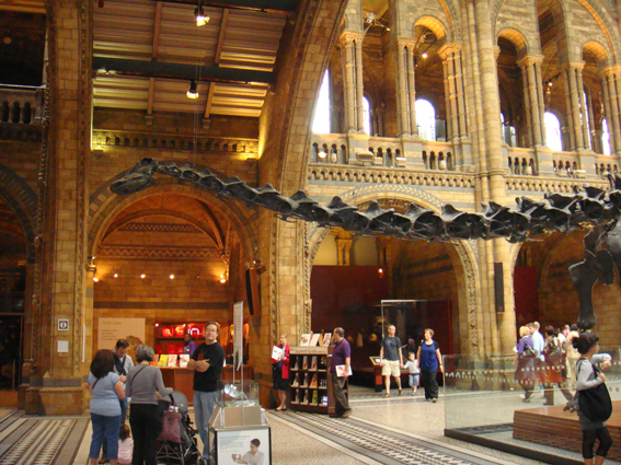 The Natural History Museum din Londra, 2009
