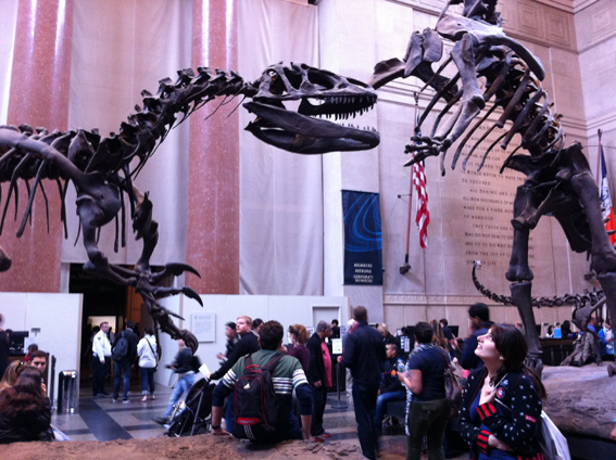 American Museum of Natural History, NY